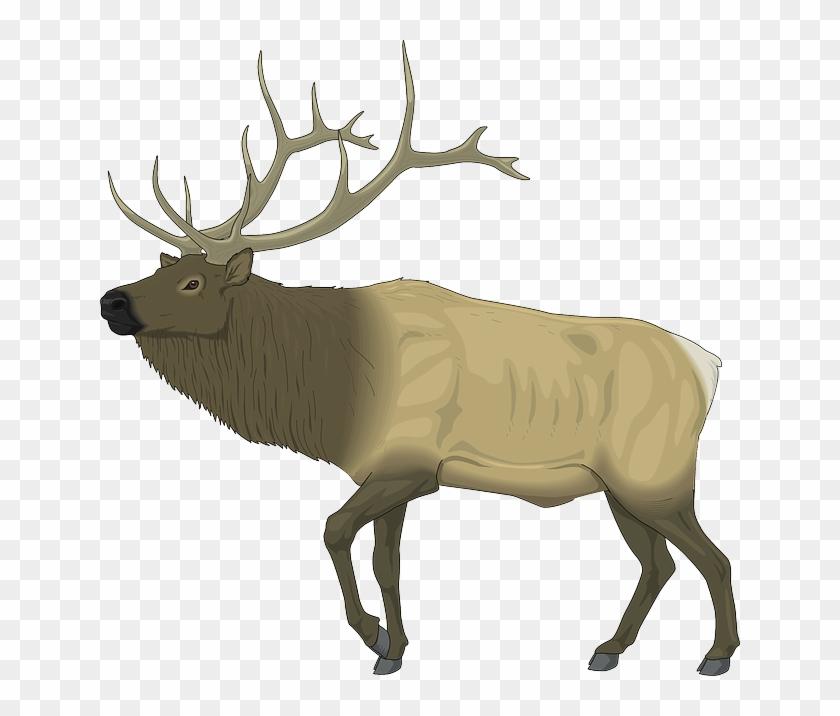 Large, Body, Moose, Animal, Mammal, Antlers - Elk Clip Art Free #9823