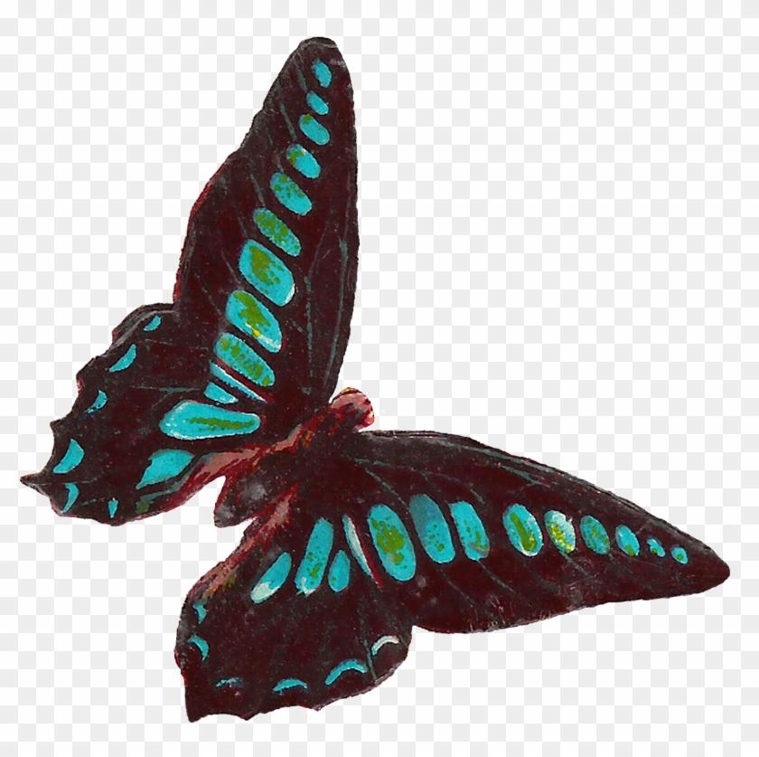 Digital Butterfly Moth Clip Art Downloads - Clip Art #10090