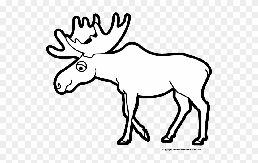 Image Of Moose Clipart 9 Clip Art Images Free For - Moose Black And White #10256