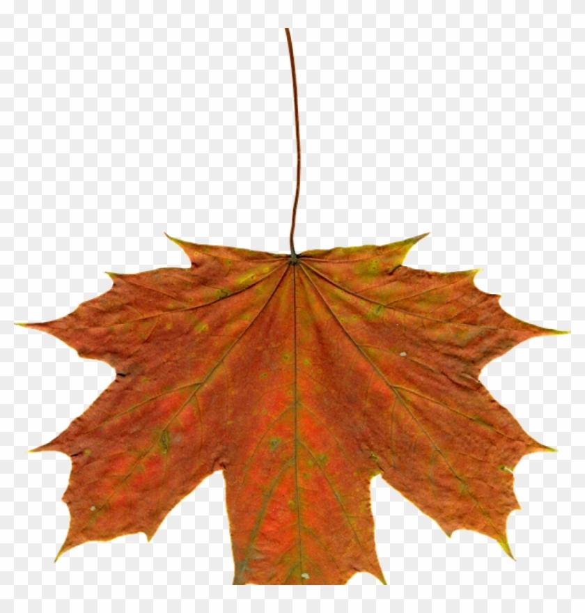 Autumn Leaves Clipart Leaves Autumn Clipart Free Photo - Leaf #10685