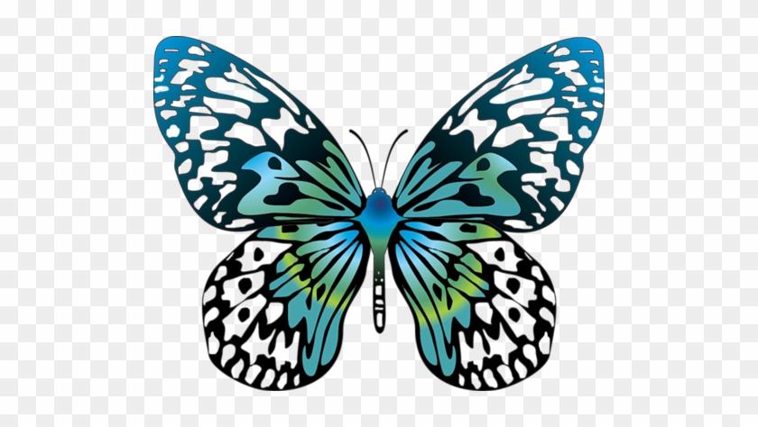 Butterfly Clip Art - Butterfly Cartoon #10945