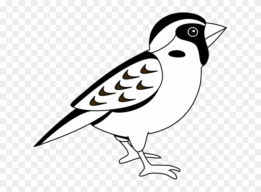 Black And White Sparrow Clipart - Black And White Image Of Sparrow #11205