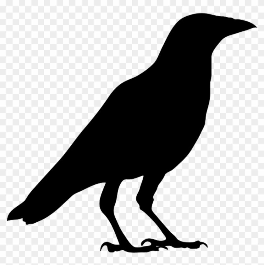 Crow Clipart Birds And Clip Art Photo Crowclipart Clipartbarn - Silhouette Crow #11226