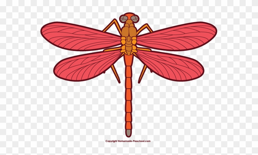 Dragonfly Clip Art Stock Images Free Clipart Images - Red Dragonfly Clipart #11253