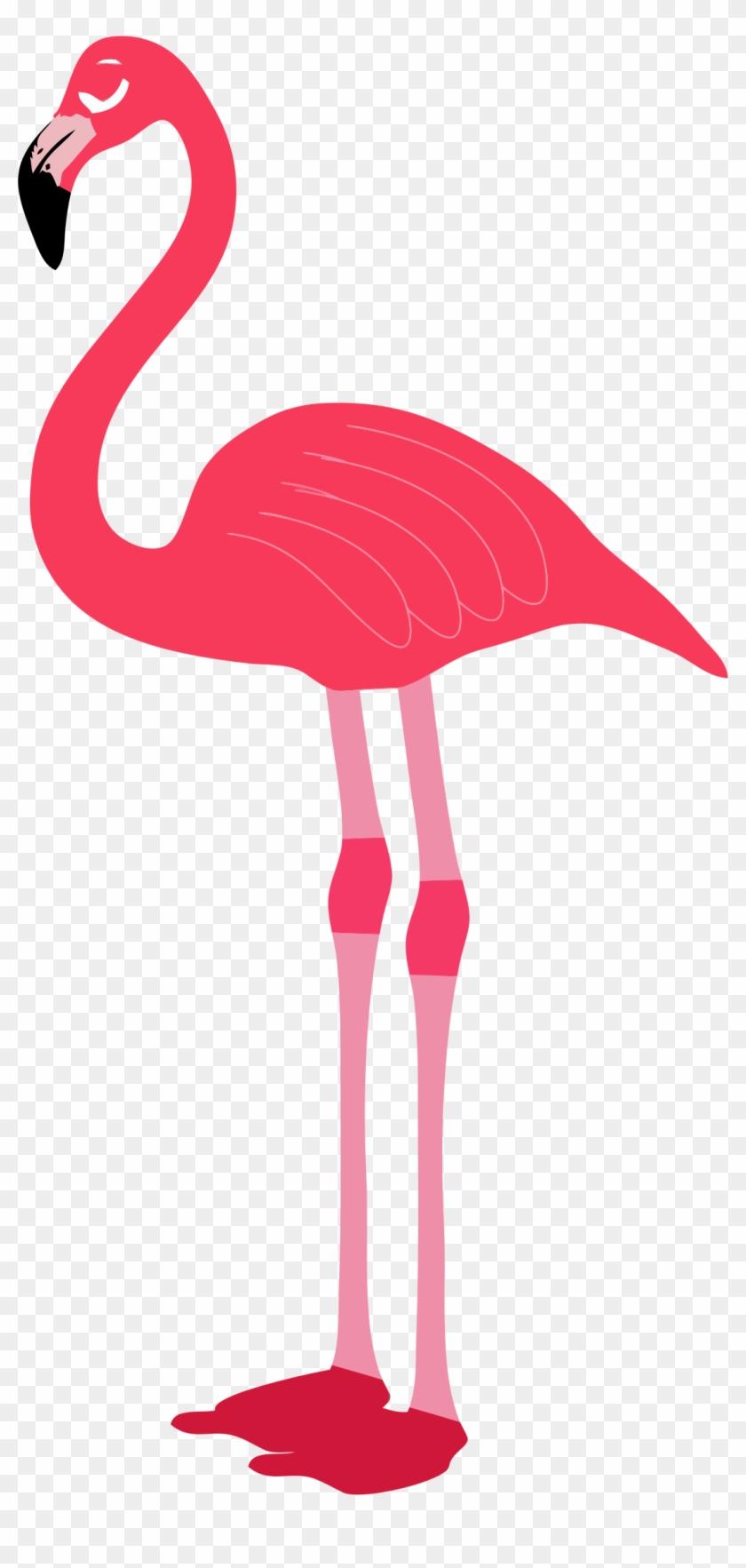 Flamingo Clip Art Free - Flamingo Transparent #11280
