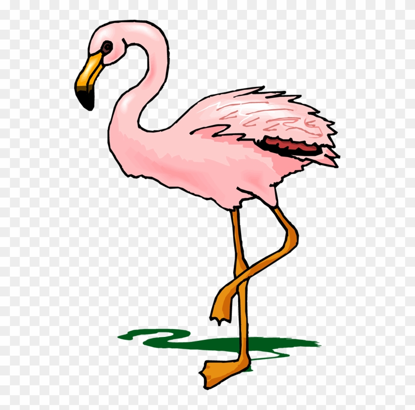 Flamingo Clipart - Cartoon Transparent Flamingo #11322