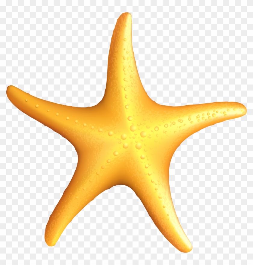 Clip Art Starfish - Starfish Clipart #12016