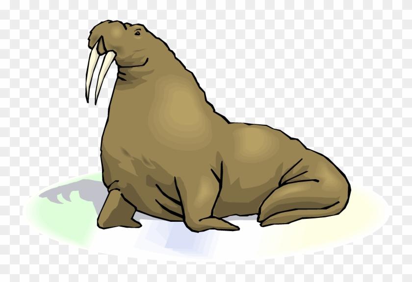 Top Walrus Clip Art Free Clipart Image - Walrus Transparent Background #12257