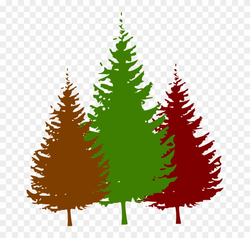 Pine Tree Silhouette Vector #12778