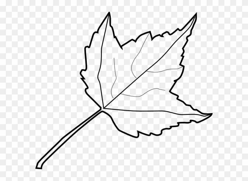 Tree Outline Coloring Book Maple Leaf Clip Art At Vector - Outline Image Of Leaf #12850