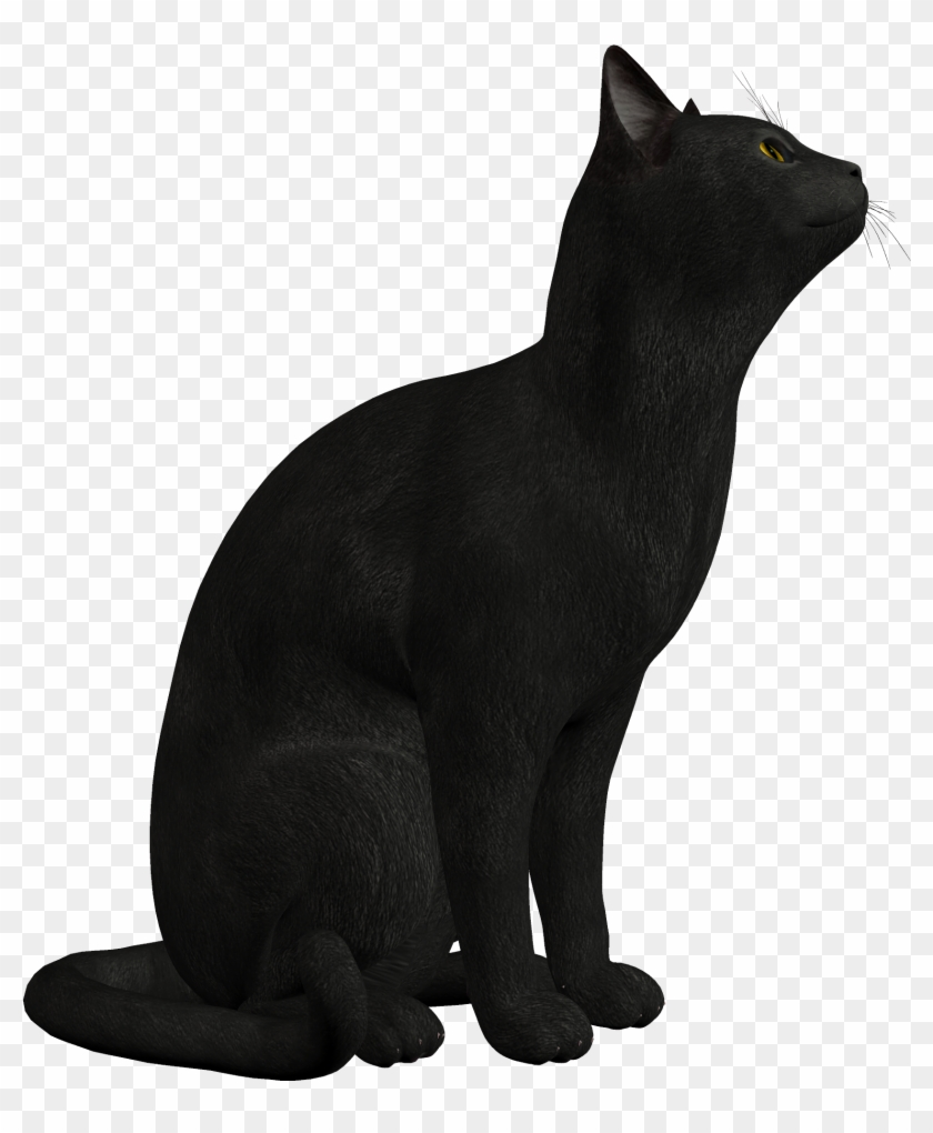 Black Cat Png Clipart 552 - Black Cat Png #12923
