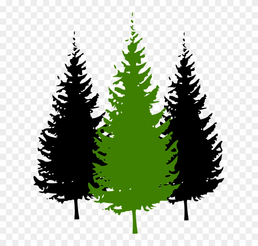 Fir Tree Clipart Conifer - Pine Tree Silhouette #13304