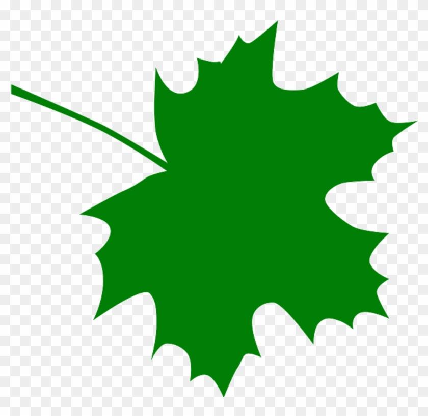 Sugar Maple Leaf Clipart Kid - Green Maple Leaf Clip Art #13323