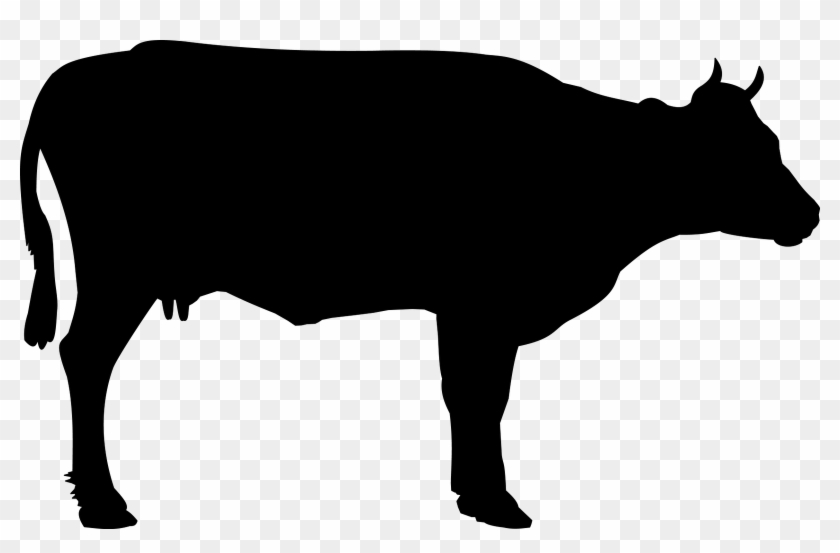 Cow 999px Black And White Animals Pinterest Cow - Black Cow Png #13632