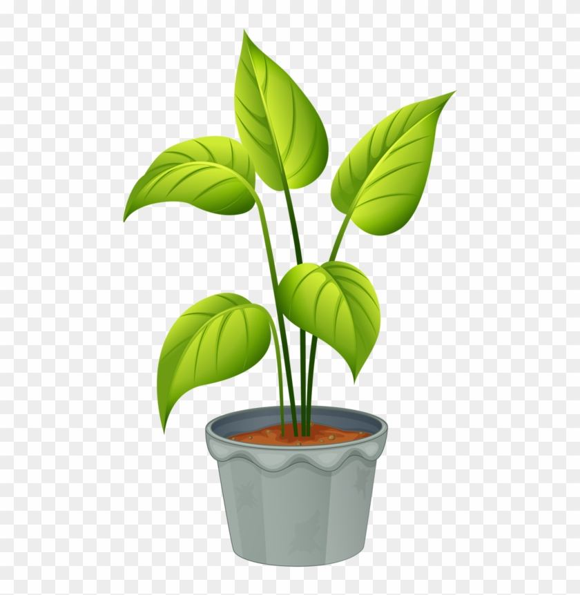 Green Home Plant - Flowering Plant And Non Flowering Plant #13750