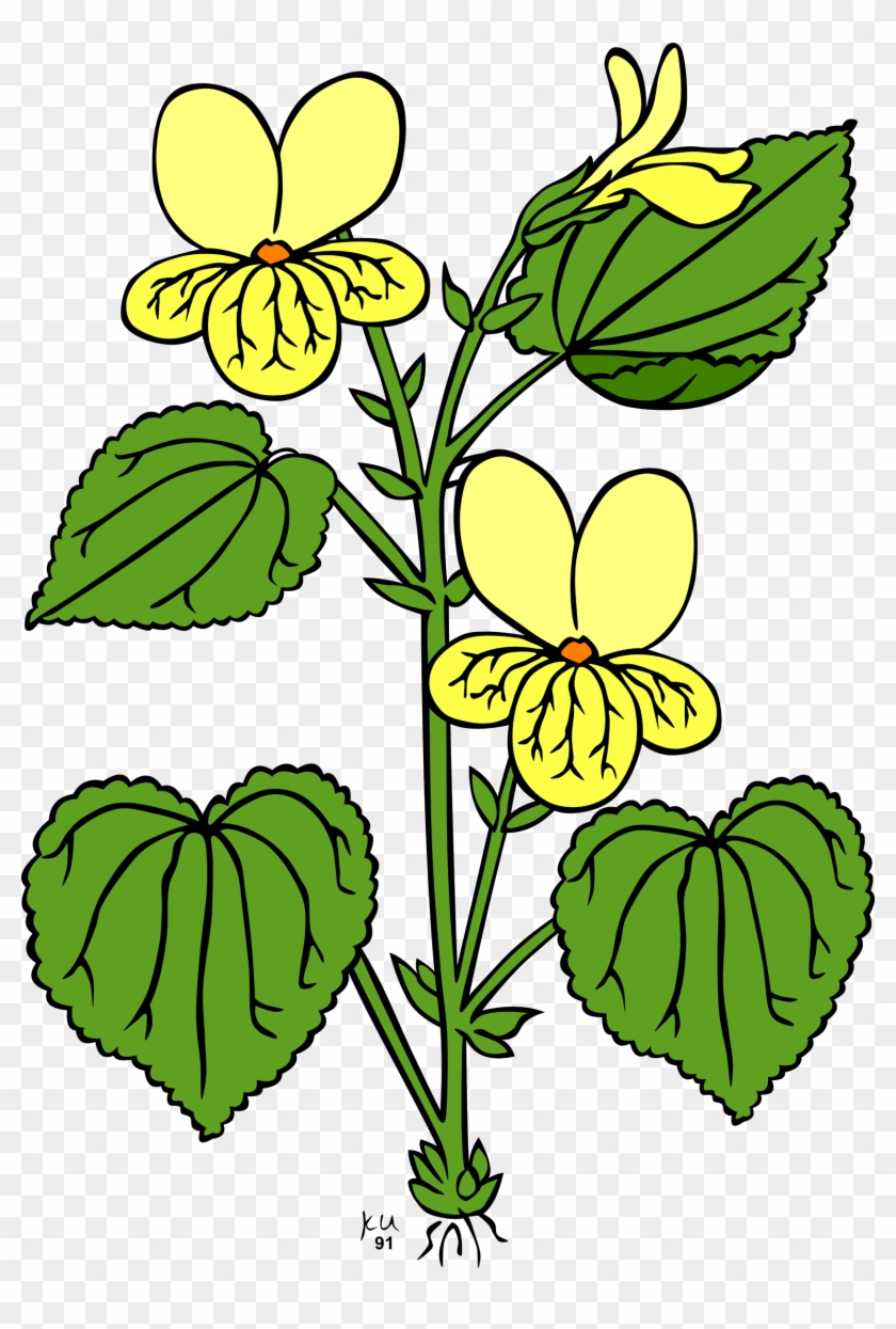 Plant With Leaves And Flowers #13786