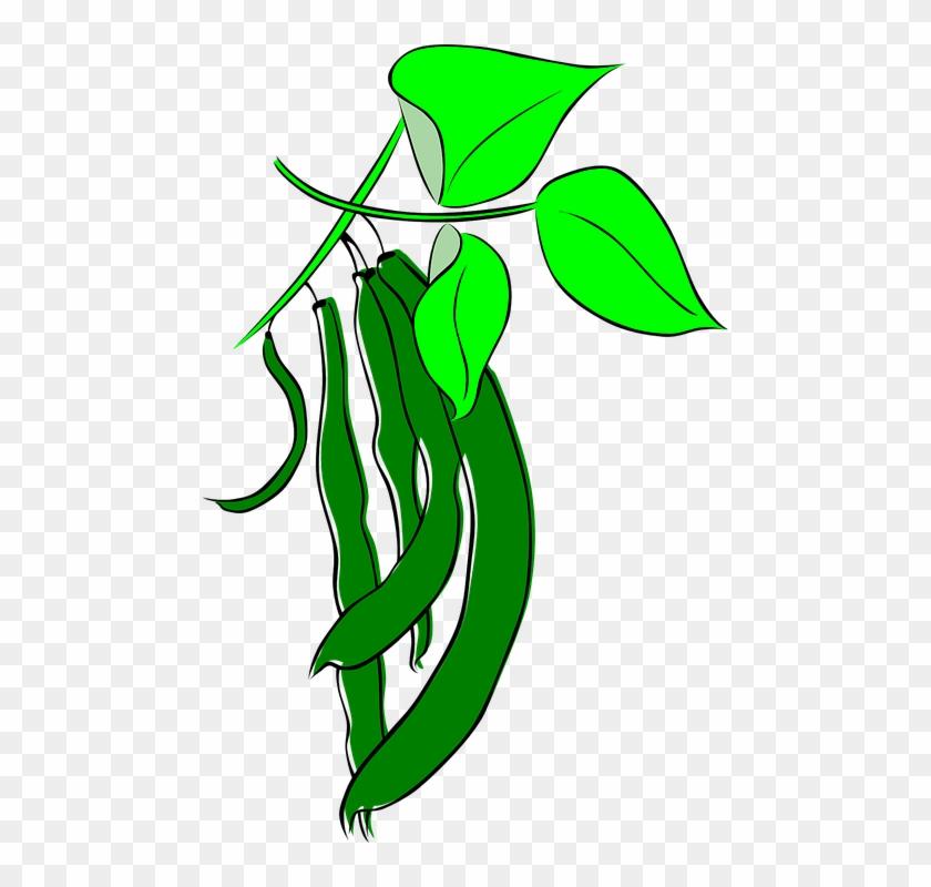 Cartoon Beans Growing #13791