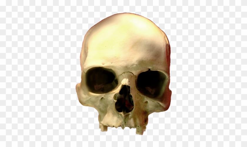 Skull Clip Art Png, Head Skull Png - Skull #13918