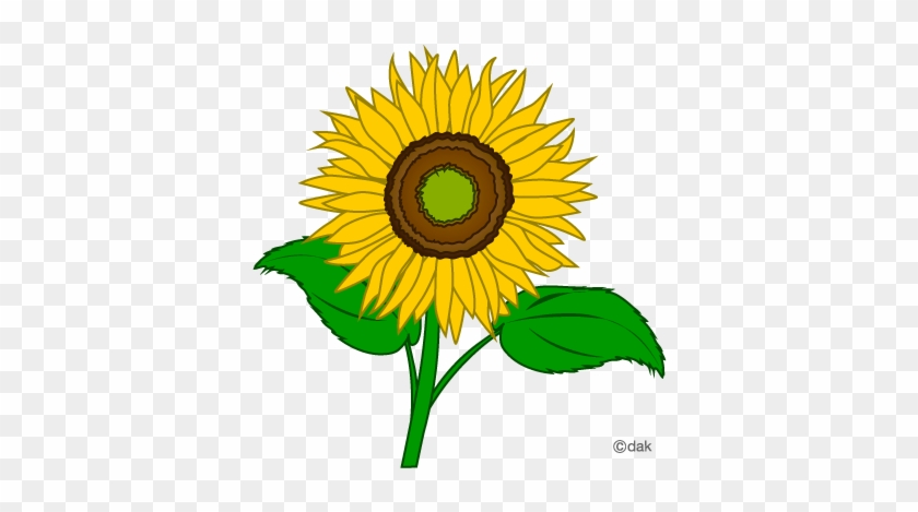 Sunflower Clip Art Free Printable Clipart 2 - Sunflower Pictures Clip Art #14076