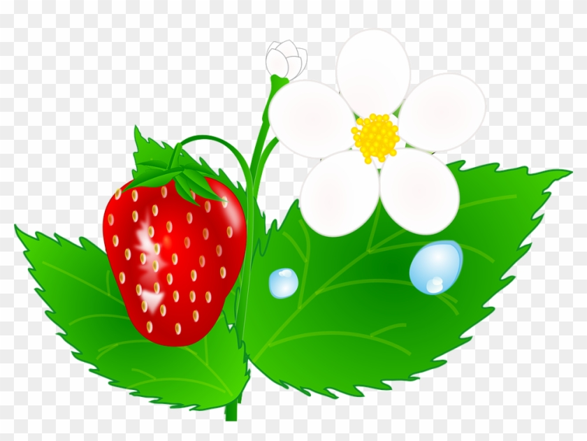 Strawberry Flower Jh Clip Art At Clipart - Strawberry Flower Clipart #14089