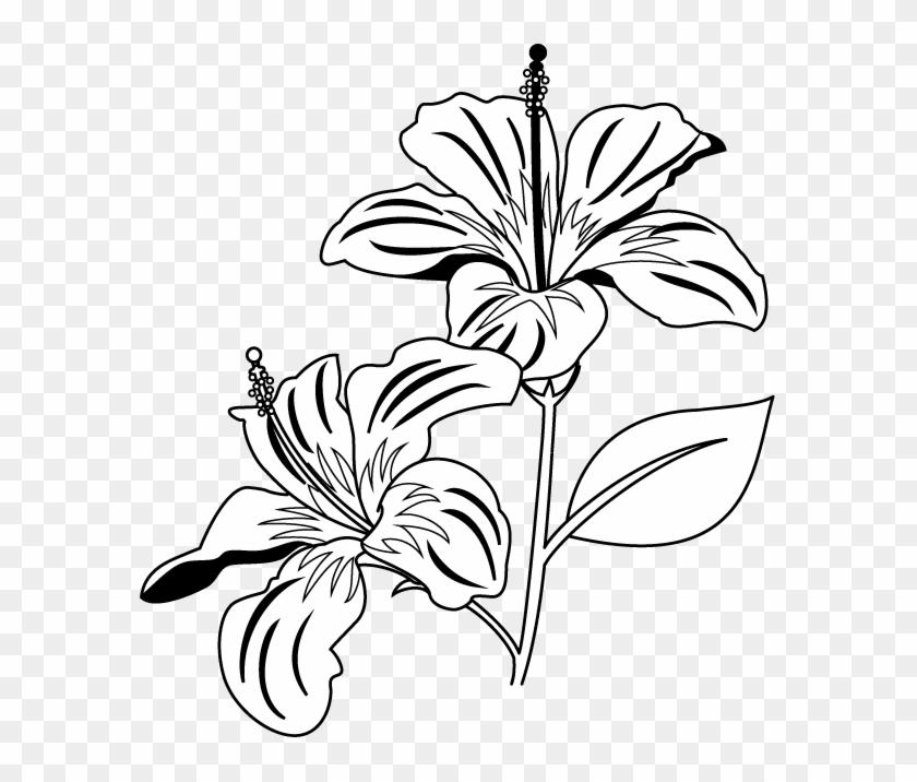 Gumamela Flower Clipart Black And White - Gumamela Clip Art Black And White #14190