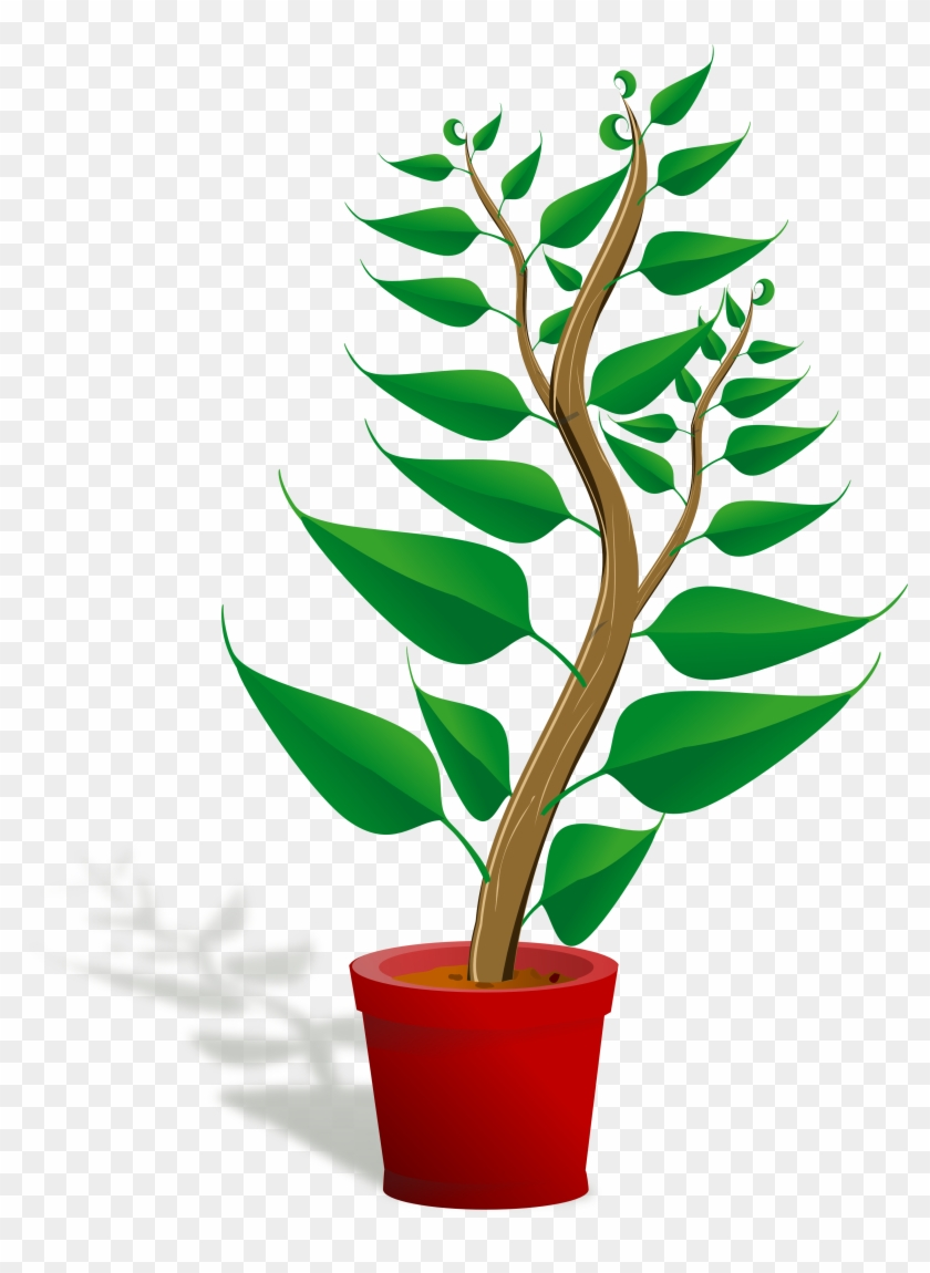 Plants Clip Art Free Clipart Images - Getting To Know Plants #14616