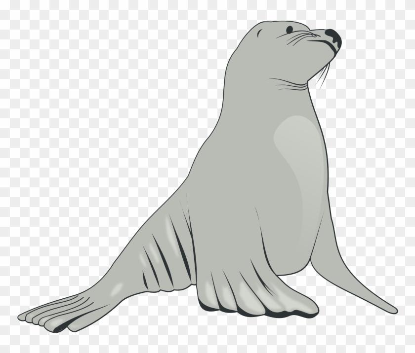 Free To Use Amp Public Domain Sea Lion Clip Art - Sea Lion Clipart #15497
