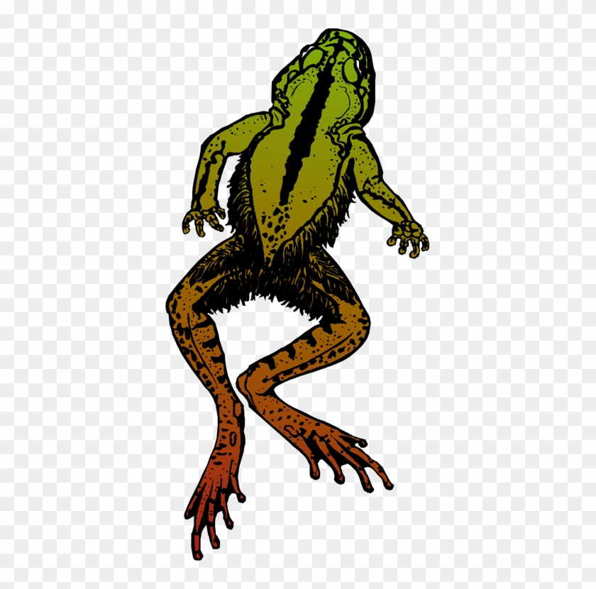 Jumping Frog - Dead Frog Png #16448