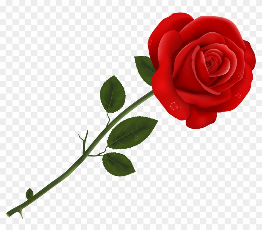 Rose Clipart Transparent Background #16915