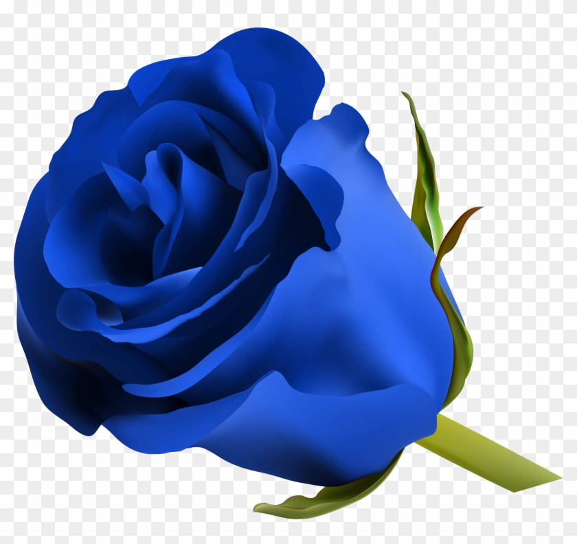 Blue Roses, Art Images, Clip Art, Pictures, Free, Beautiful, - Blue Rose Png #17263