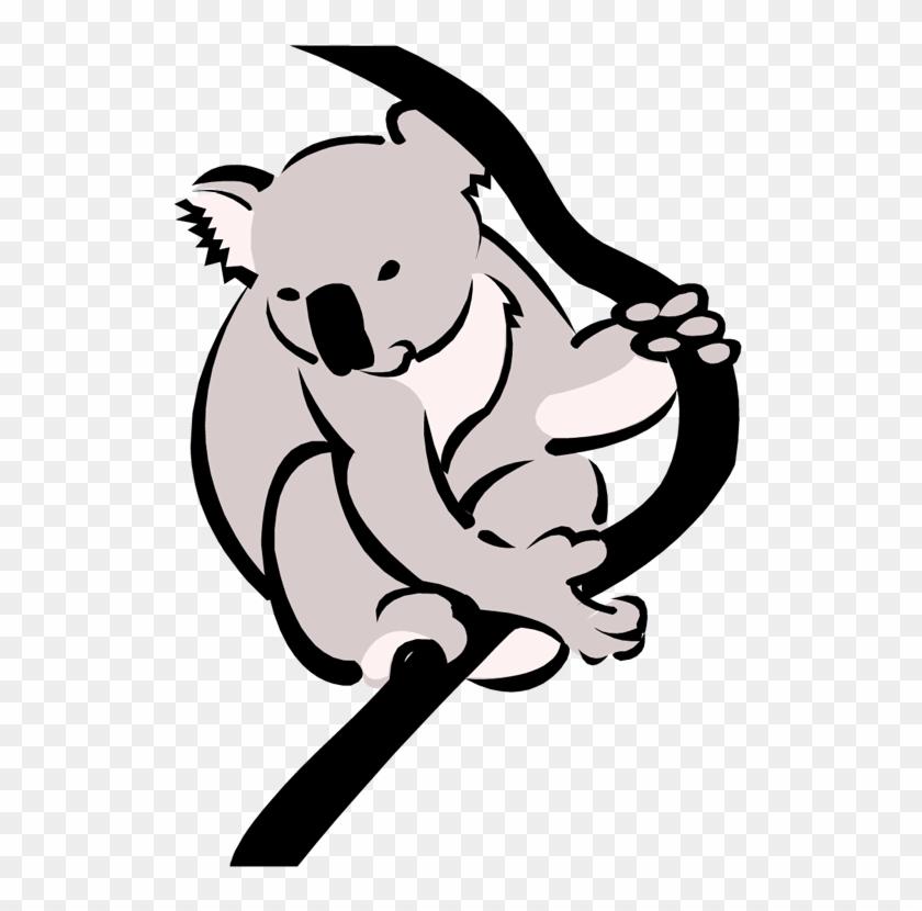 Download Png Image Report - Koala Clipart #17355
