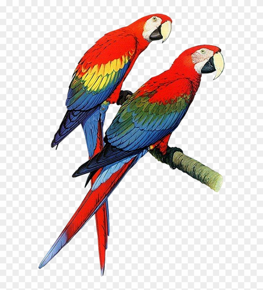 Download Parrot Png Transparent Images Transparent - Parrots Of The World Book #17579