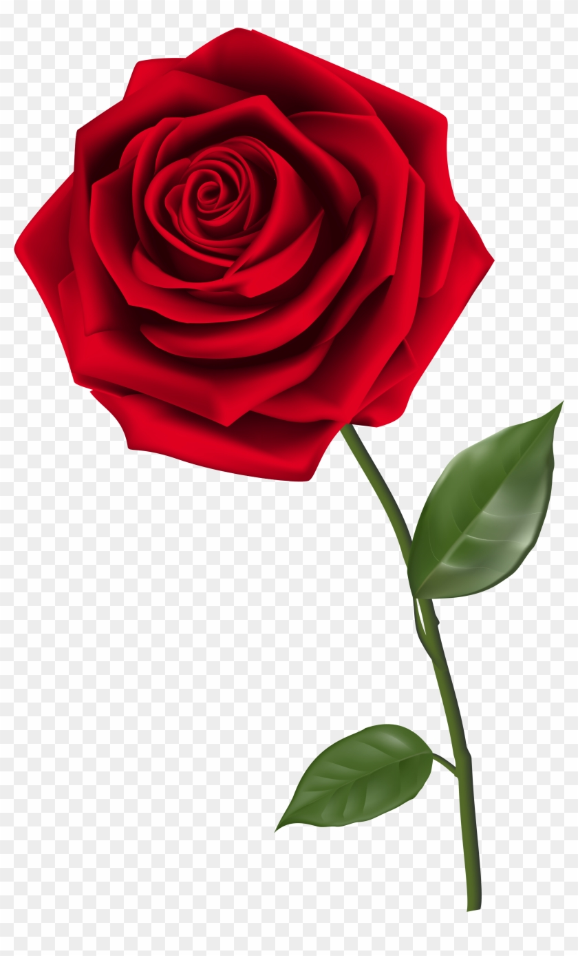 Clipart Homey Idea Rose Clipart Single Red Png Image - Red Rose Png #17635