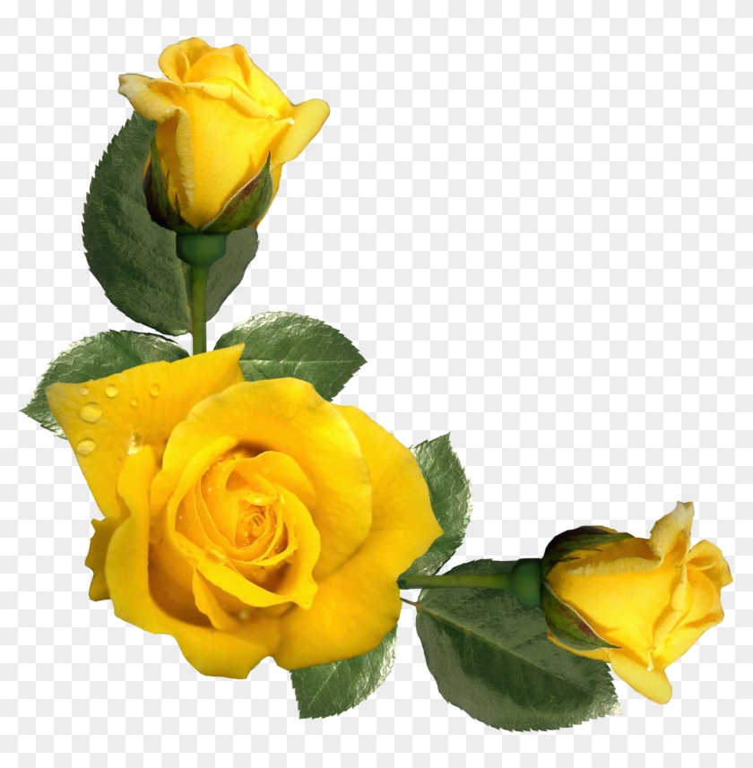 Yellow Roses - Inspirational Quotes With Yellow Roses #83656
