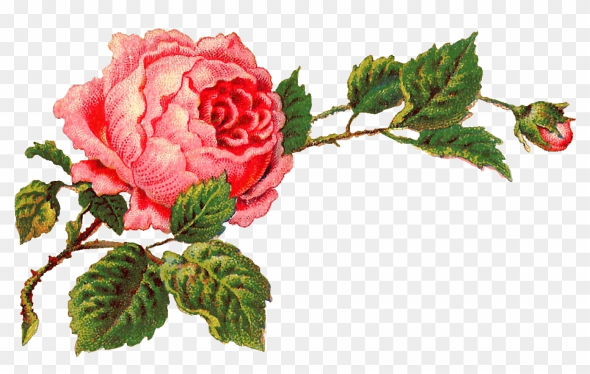 Isn T This Digital Pink Rose Clip Art Gorgeous I Created Vintage