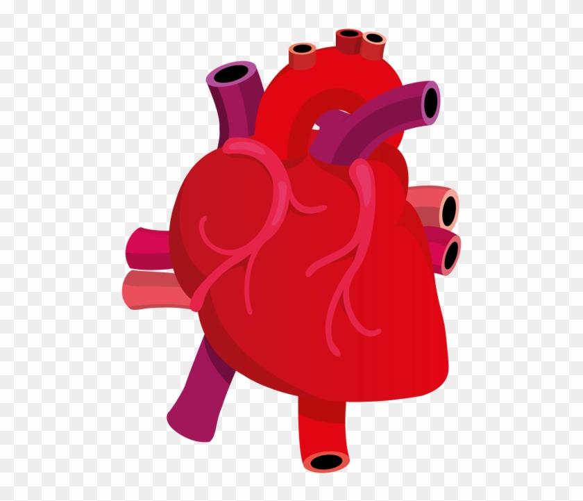Human Heart Clipart Png - Human Heart Vector Png #84054