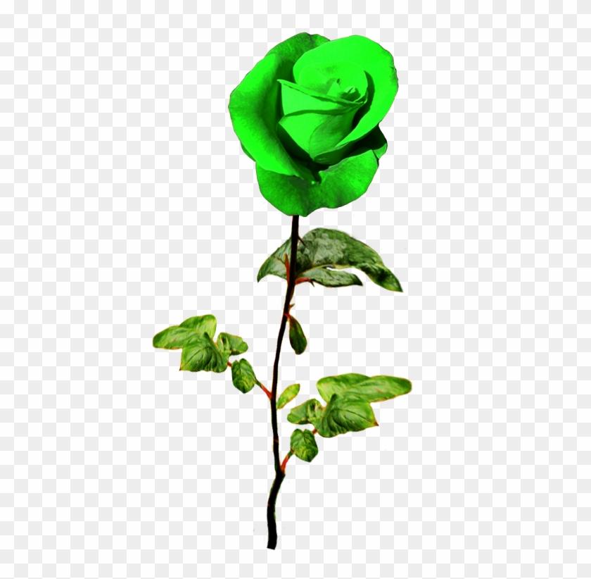 Patrick's Day Green Rose - Rose #85034