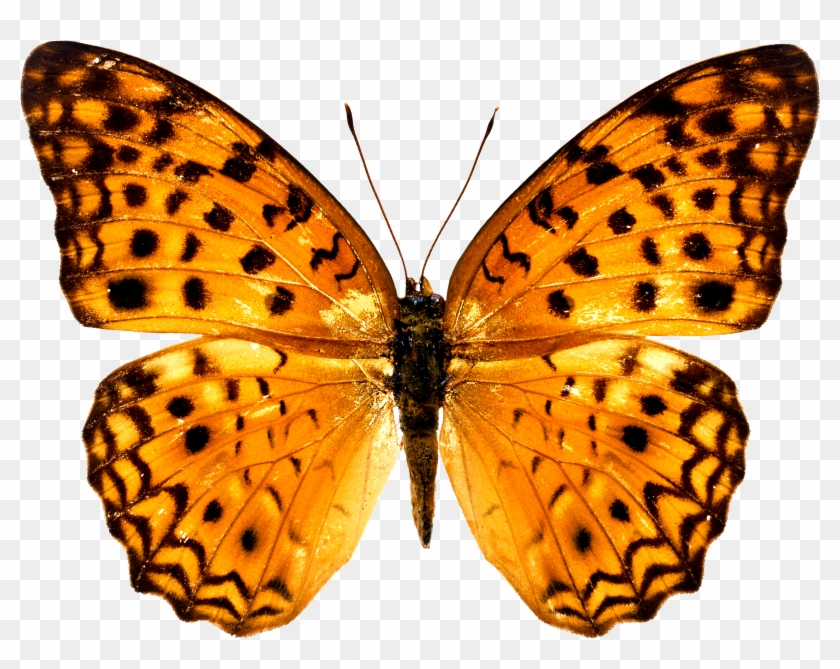 Colorful Butterfly Wallpapers Free Download Ultra Hd - Butterfly Images Free Download #461827