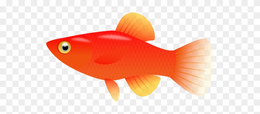 Backgrounds For Fish Clipart Transparent Background - Goldfish #464526