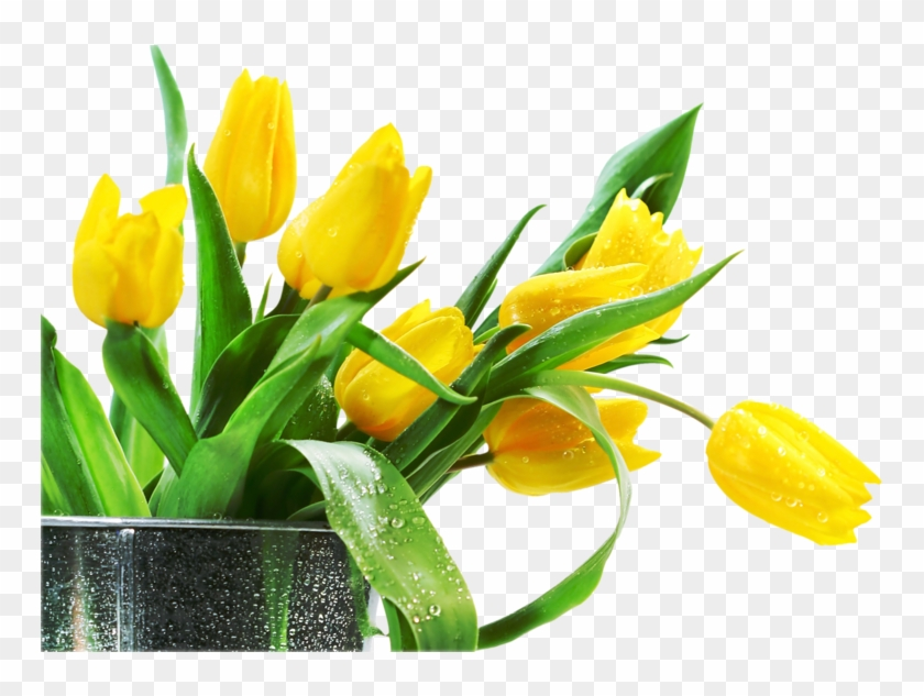 Png Lale, Png Тюльпаны,png Tulips, Png Tulipán, Laleler, - Yellow Tulips Happy Birthday #464655