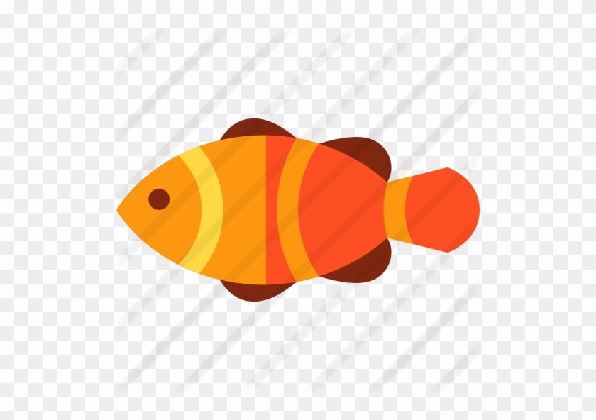 Clown Fish - Coral Reef Fish #464799