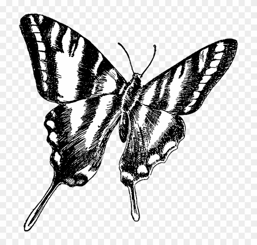 Black And White Butterflies Pictures 24, Buy Clip Art - Share Your Passion Quotes #472934