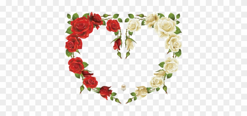 Coe Rouge Red Rose - Rose Frame #478691