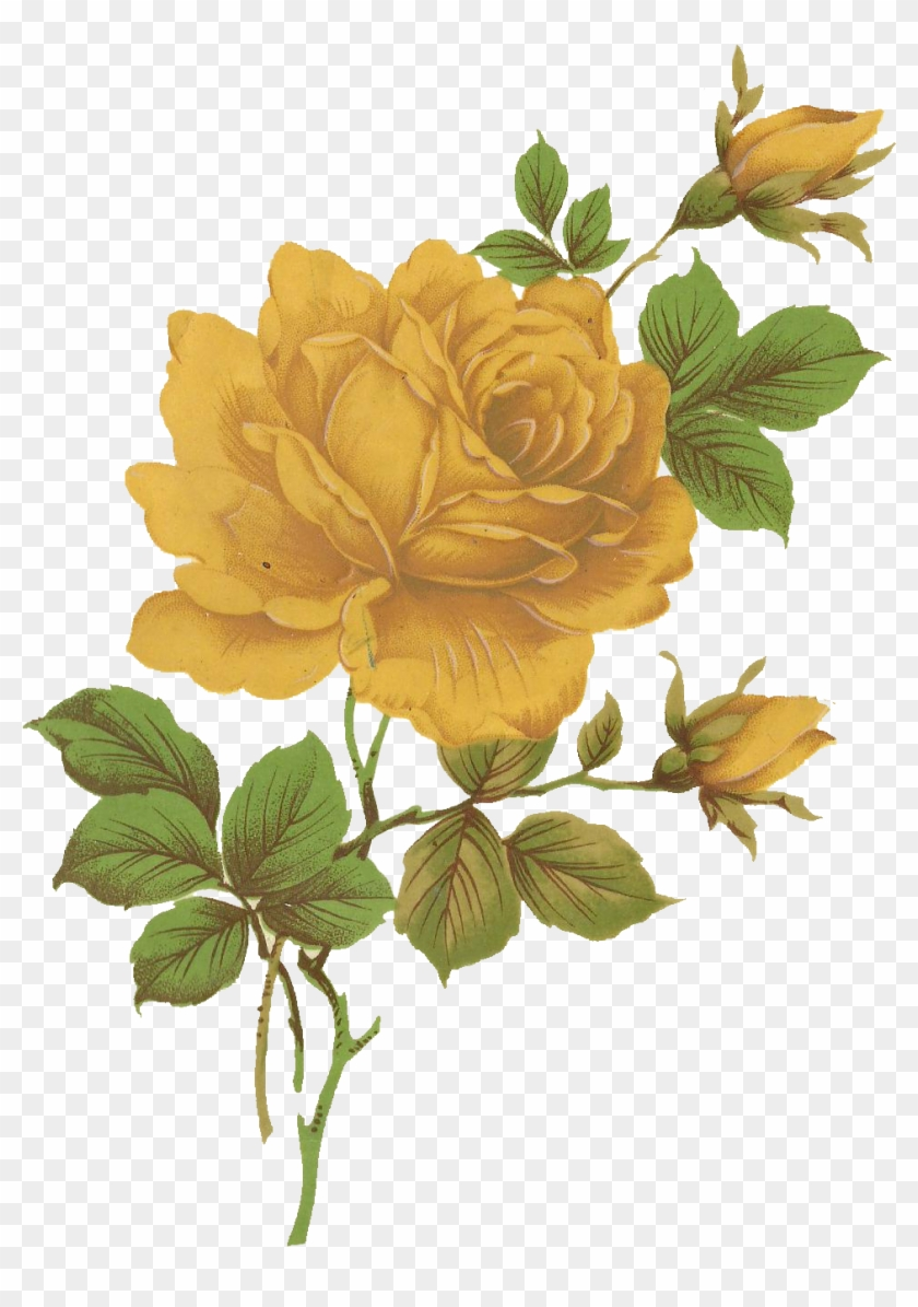 Jinifur Yellow Rose By Jinifur Vintage Yellow Roses Png Free