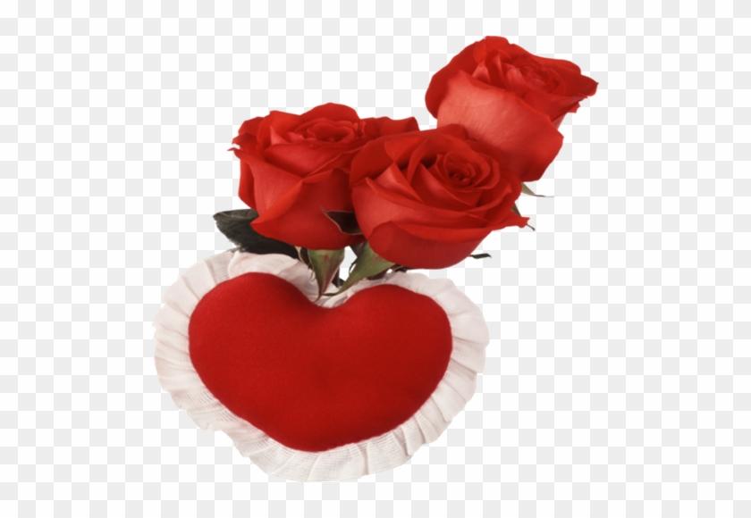 Urdu Image, Tube, Red Roses, Beautiful, Roses, Gentleness - Love You