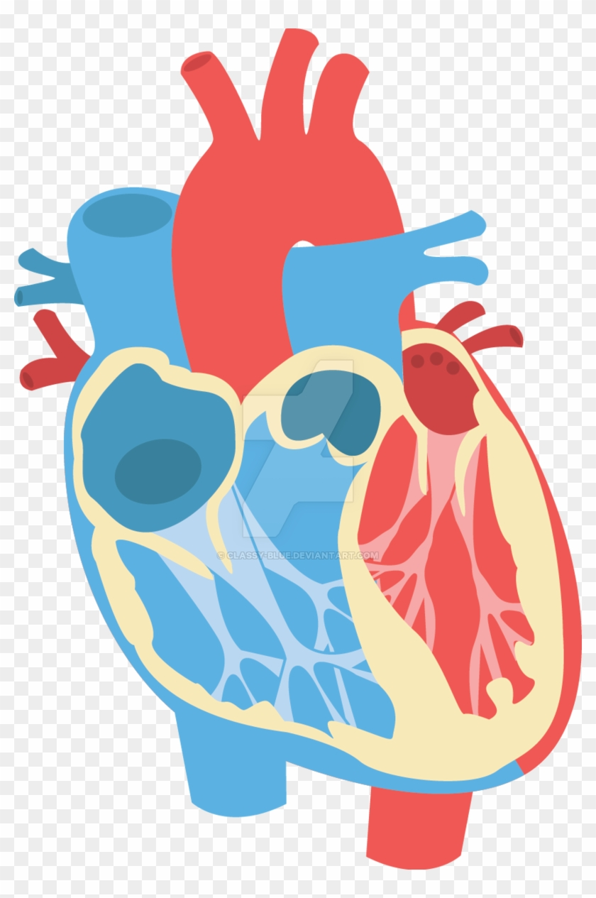 Human Heart Diagram By Classy-blue - Human Heart Vector Png #492126