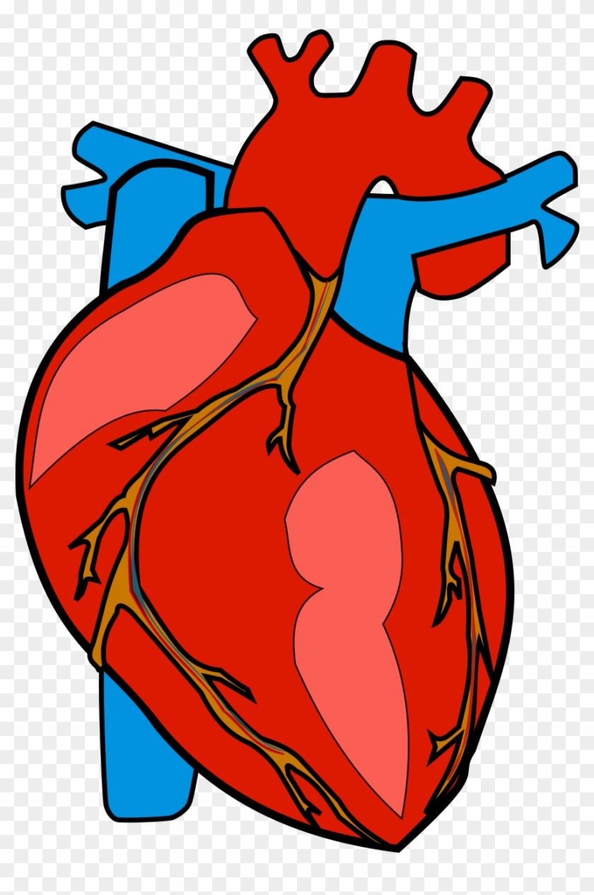 Human Heart - Human Heart Clipart #492146