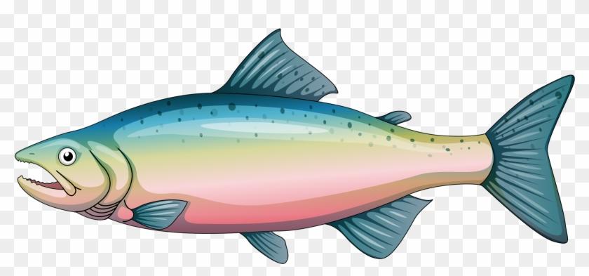 Album - Cartoon Rainbow Trout #496188