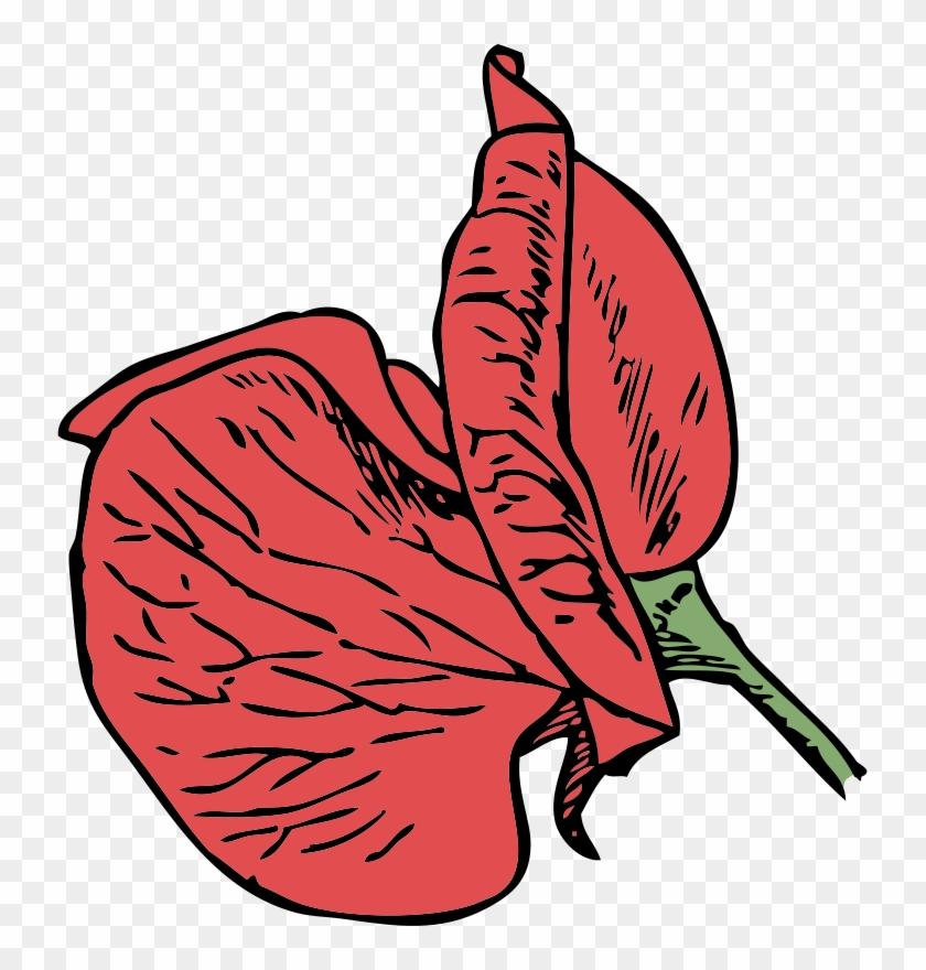 Sweet Pea Flower Clip Art - Sweet Pea Flower Cartoon #85813