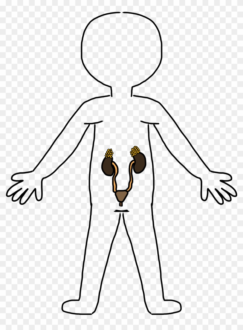 Body Clip Art - Free Clipart Excretory System Black And White #86165
